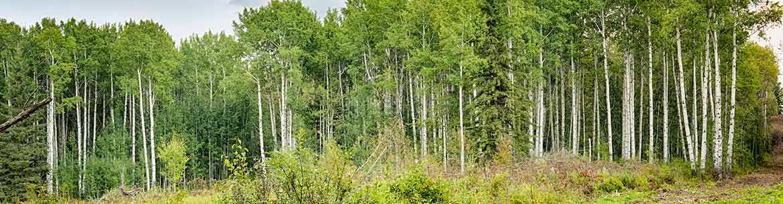 Busenius, UNSRB, Alberta (Photo by Kyle Marquardt)