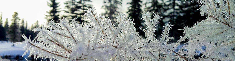 Winter in Alberta (Photo by Jenel Bode)