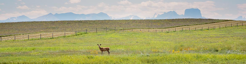 Prairie grasslands, Alberta (Photo by River Run Photography)