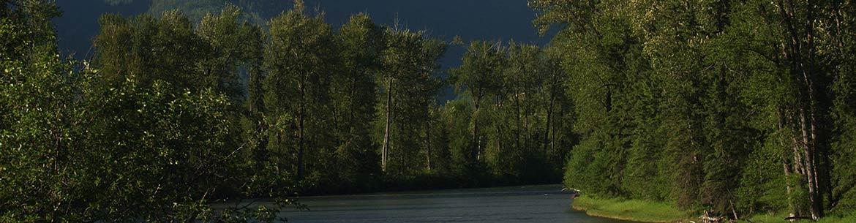 Sentier Ancient Cottonwood, rivière Elk, C.-B. (Photo de Steve Short)