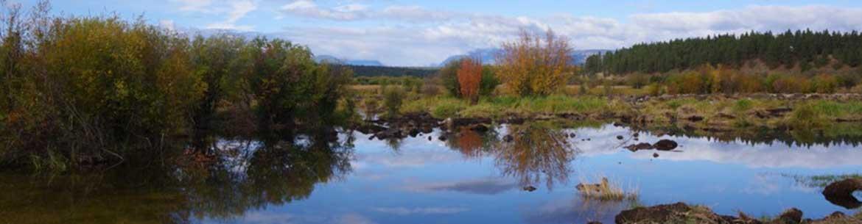 Cherry Meadows wetland restoration - from farm field to wet meadow (Photo by Carol Latter