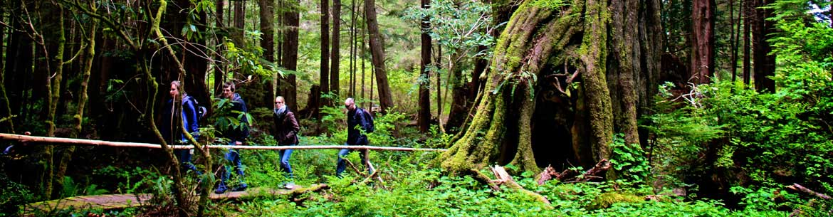 Boardwalks lead visitors through the dense rainforest on Clayoquot Island (Photo by Jill Patterson)