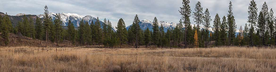 Kootenay River Ranch (Photo by Lyle Grisdale)