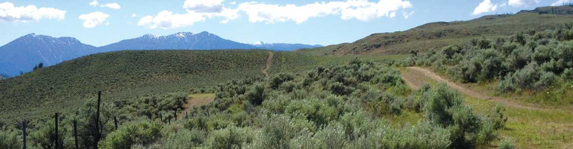 Sagebrush Slopes, on the Sage and Sparrow Conservation Area, BC (Photo by NCC)