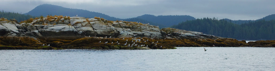 A flock of birds in the Central Coast (Photo by NCC)