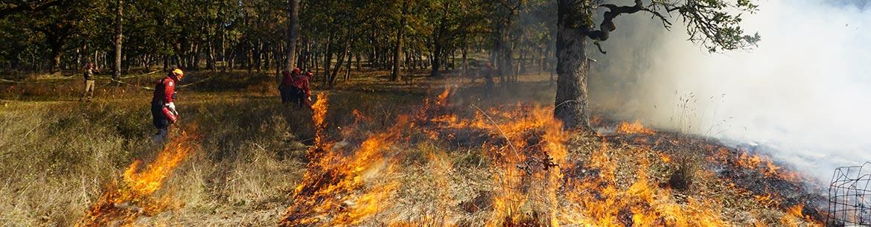 Prescribed burn at Cowichan Garry Oak Preserve (Photo by NCC)