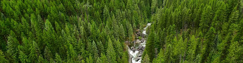 Next Creek forests on Darkwoods, BC (Photo by Steve Ogle)