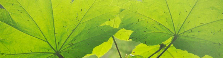 Bois piquant, Ellerslie Creek, C.-B. (Photo de CNC)