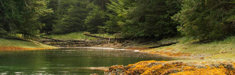Estuaire Gullchucks, C.-B. (Photo de Tim Ennis/CNC)