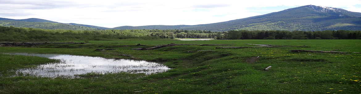 A look over the expansive meadows and wetlands at Morrissey Meadows Conservation Area (Photo by NCC)