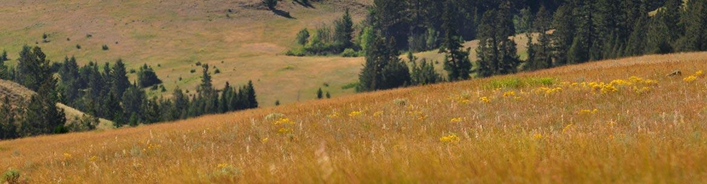 Warner Philip Conservation Area, BC, (Photo by NCC/Tim Ennis)
