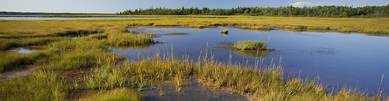 Egmont Bay Natural Area, PEI (Photo by John Sylvester)