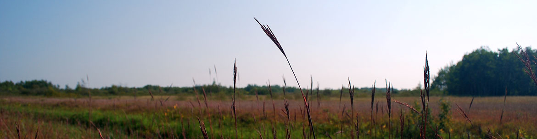 Big bluestem, Tall Grass Prairie, MB (Photo by NCC)