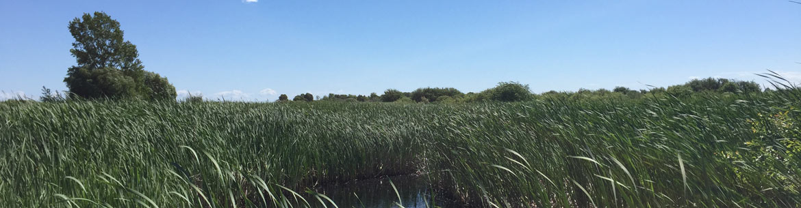 Lake Winnipeg Coastal Marsh (Photo by NCC)
