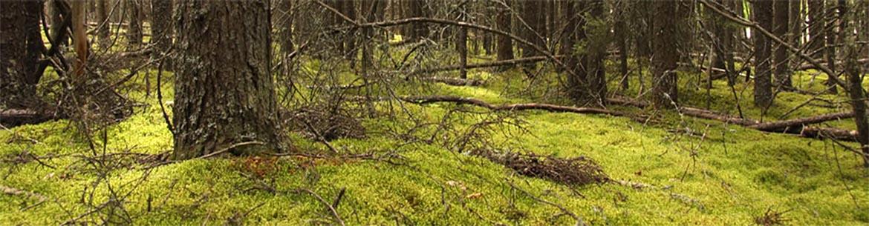 Black spruce bog, MB (Photo by NCC)