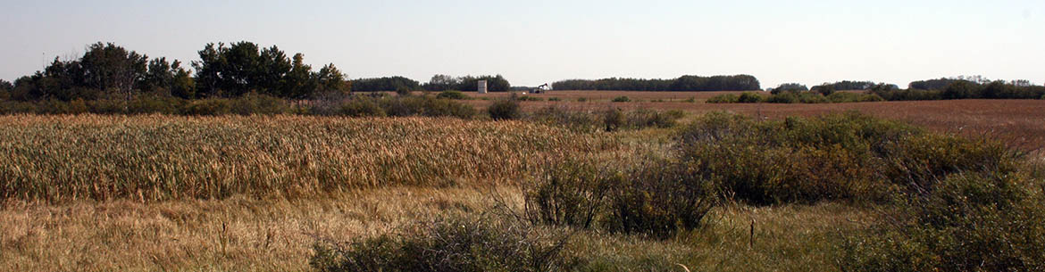 West Souris Mixed Grass Prairie Natural Area, MB (Photo by NCC)