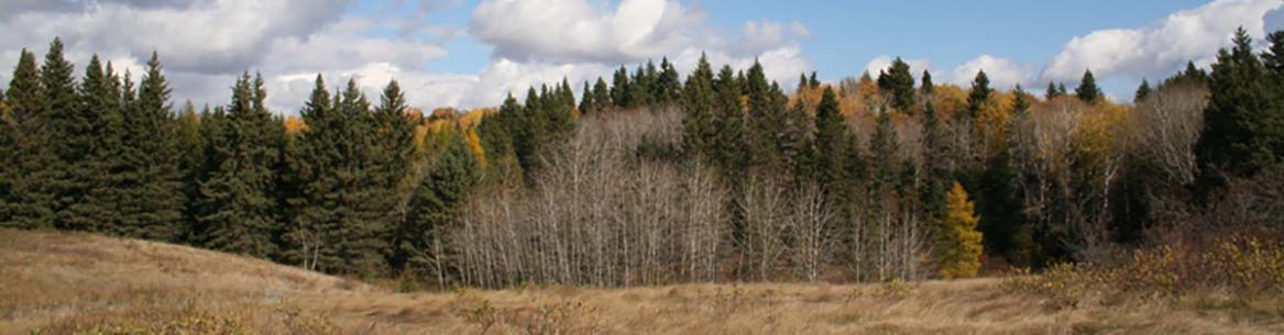 A grassland in the Riding Mountain Natural Area (Photo by NCC)