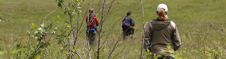 Activité Bénévoles pour la conservation, forêt-parc à trembles, Mont Riding, Man. (Photo de CNC)