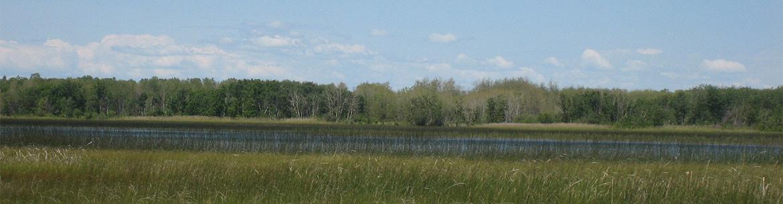 Swan Lake Wetlands Parklands Complex (Photo by NCC)