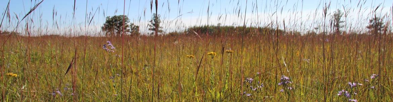Tallgrass Prairie (Photo by NCC)