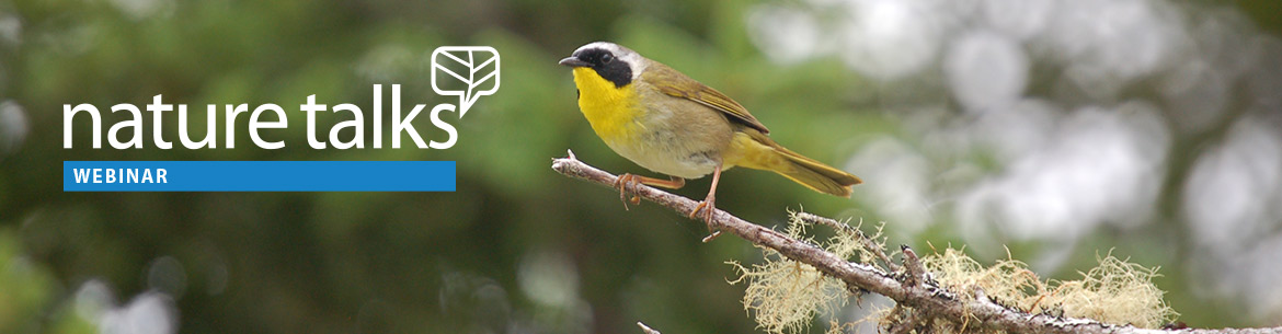 Common Yellowthroat, NS; Photo by Andrea Mosher