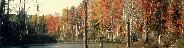 Tourbière Cavan, Ontario, première propriété de CNC (photo de CNC)