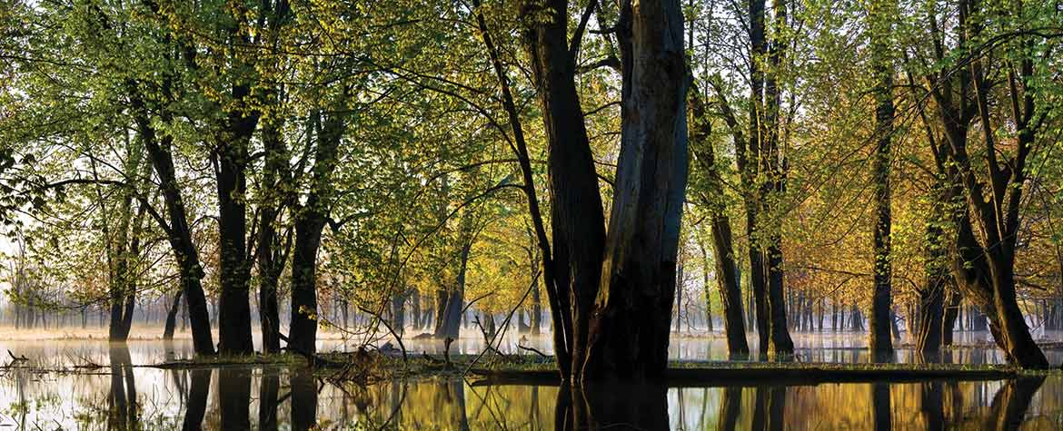 Wetland with trees (Photo by Janusz Wrobel/All Canada Photos)