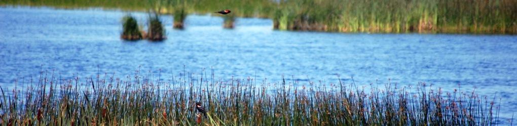 Marais salés, Réserve Naturelle, Escuminac, N.-B. (Photo par CNC)