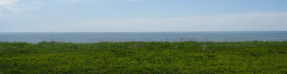 Aire naturelle de la Péninsule acadienne, Pokemouche, Nouveau-Brunswick (photo de CNC)