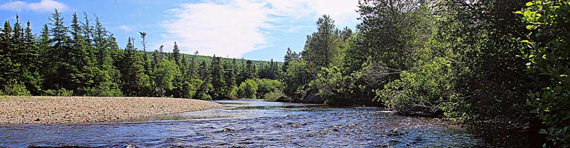 Barachois Brook Nature Reserve, NL (Photo by Aiden Mahoney)