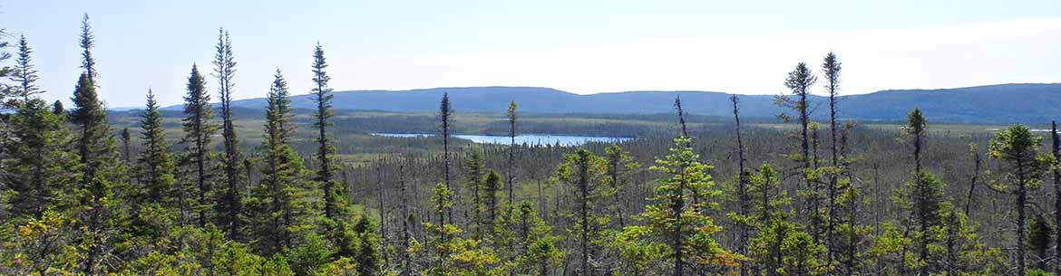 View from the Lloyds River Escarpment (Photo by NCC)