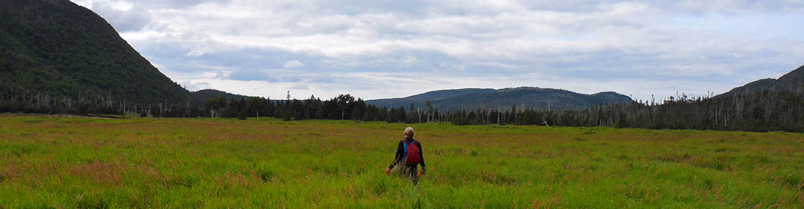 Walking through the Grasses (Photo by NCC)