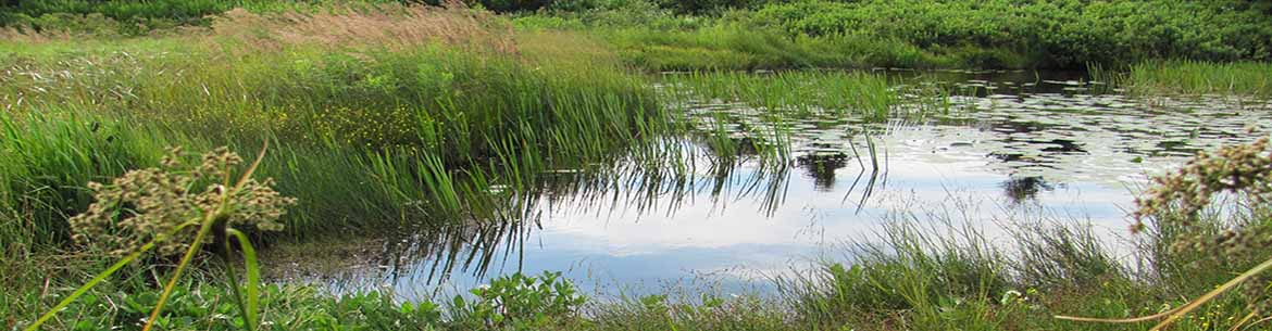 Wetland in the Torbay Gully (Photo by NCC)