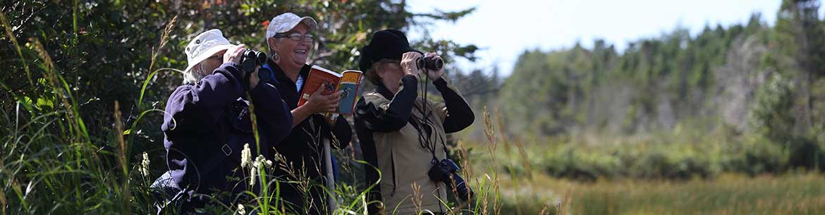 Volunteer birders on the Grand Codroy Estuary Nature Reserve (Photo by M. Dembeck)