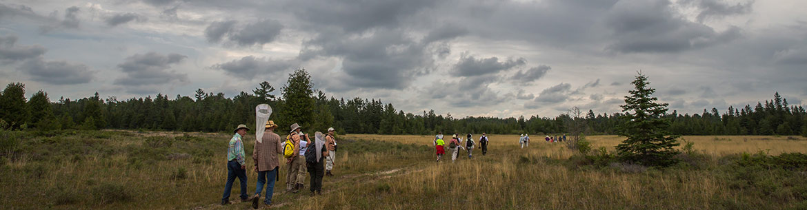 Butterfly count, Carden Alvar, ON (Photo by NCC)