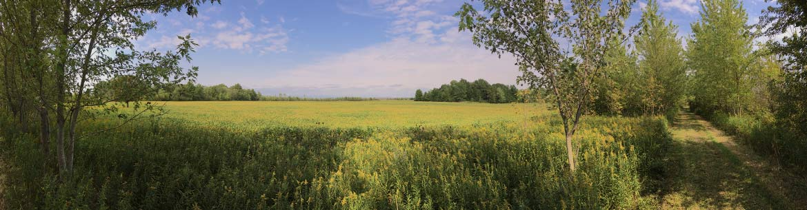 Essex Forests and Wetlands Natural Area, ON (Photo by NCC)
