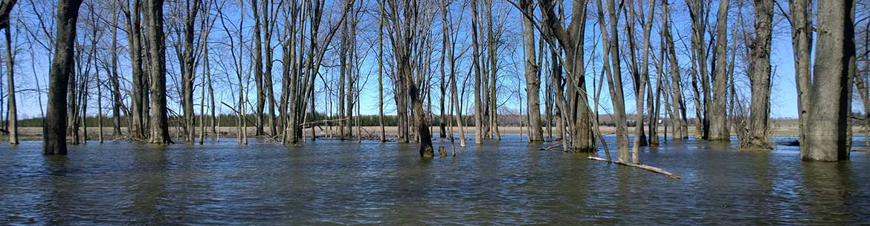 Milieux humides de Minesing, Ont. (Photo de CNC)