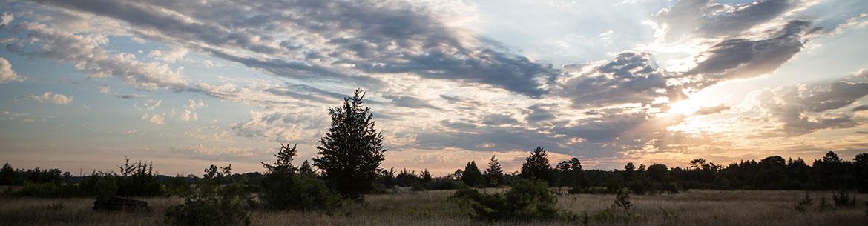 Napanee Plain Alvar Nature Reserve, ON (Photo by Vincent Luk/Evermaven)