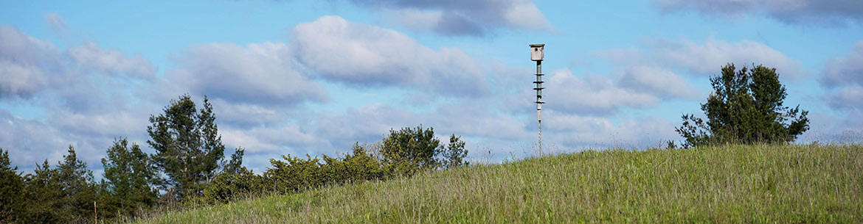 Nest boxes, Hazel Bird Nature Reserve, ON (Photo by NCC)