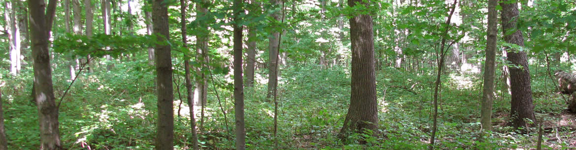 Point Abino Woods (Photo by NCC)