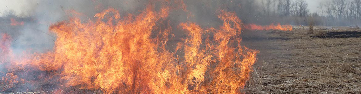 Prescribed burn at Turkey Point Company, Long Point, ON (Photo by NCC)