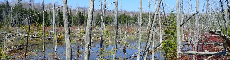 Propriété Britain Lake Wetland and Woodlands, péninsule Saugeen Bruce, Ont. (Photo de CNC)