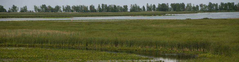 Marshes in Point Pelee (Photo by Alasdair McLellan)