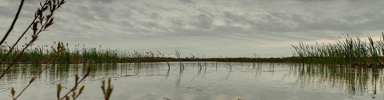 Restored wetland on Pelee Island. Photo by Brent Sinclair