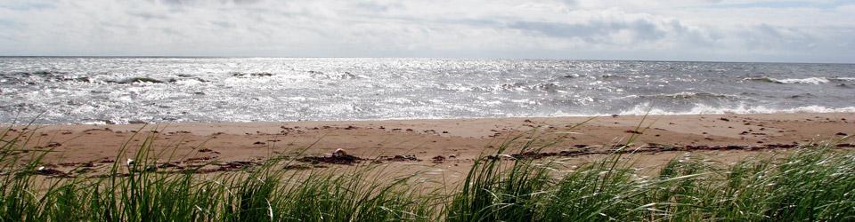 Herbes sur les rives de l'île Boughton, Î.-P.-É. (photo de CNC)