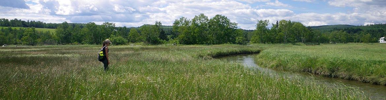 Barachois de la rivière Nouvelle, QC (Photo de CNC)