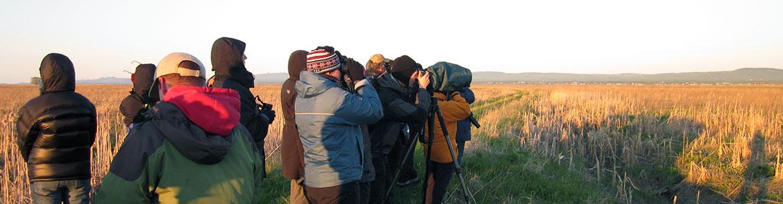 Bénévoles faisant un inventaire d'oiseaux à l'Île-aux-Grues, Québec (Photo de CNC)