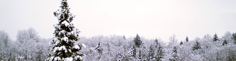 Kenauk hiver (Photo de Mari Hill Harpur)