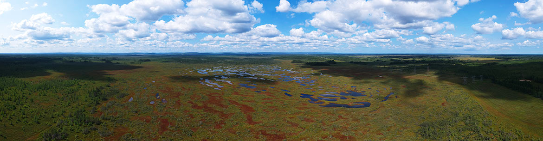 Tourbière du Lac-à-la-Tortue, Mauricie (Photo de CNC)