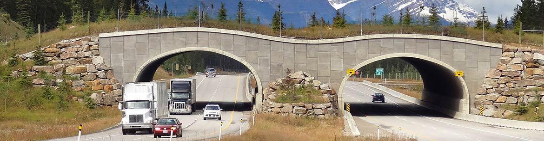 Passage faunique, Parc national de Banff, AB (Photo de WikiPedant)